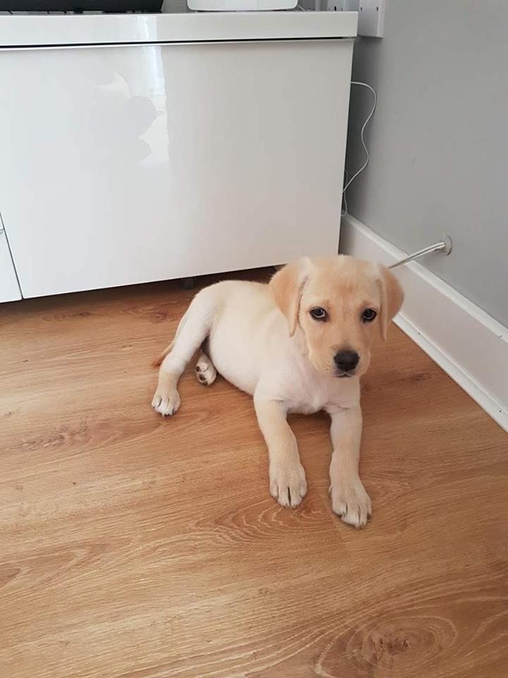 Rosie the pup 12 weeks old
