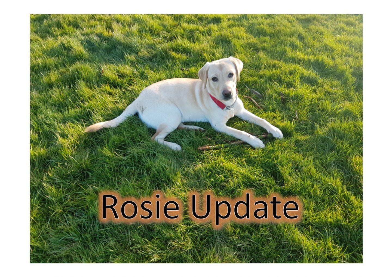 7 Month old Puppy Update
