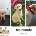 the knight tribe-Rosie