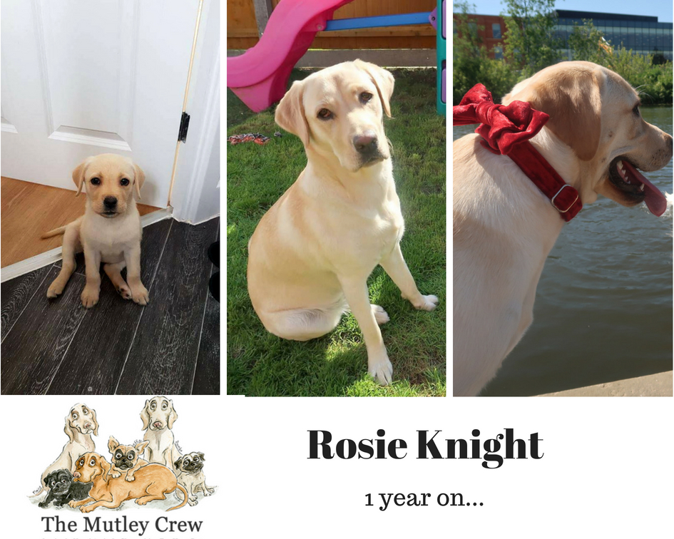 Rosie's 1 year update