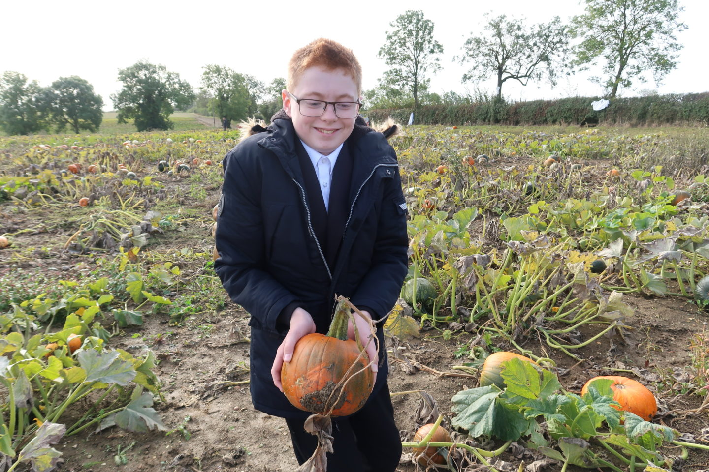 Pick your own Pumpkin at Hill Farm, Chesterton