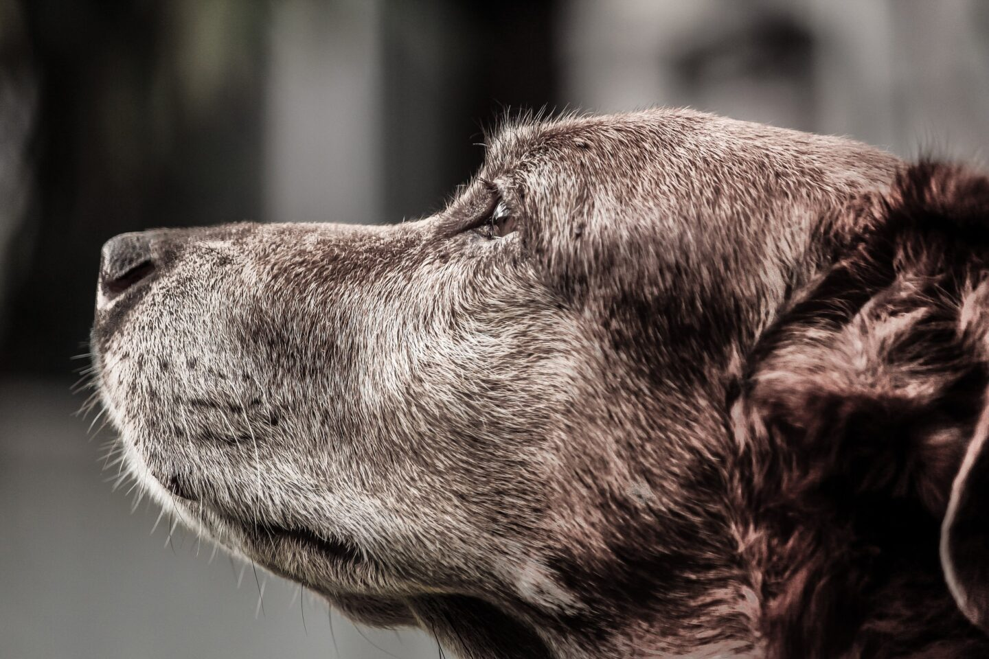 6 Common Health Problems in Older Dogs How to Treat Them