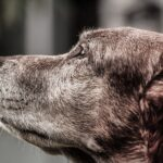 The Knight Tribe - Senior Dog